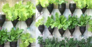 Cara Membuat Kebun Vertikal Dari Botol Bekas Yang Mudah Dan