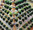 Cara Membuat Kebun Vertikal dari Botol Bekas yang Mudah dan Murah