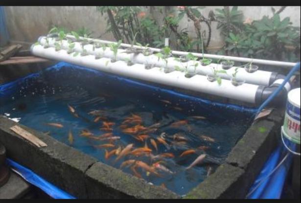 8 Alasan Penggunaan Terpal dalam Budidaya Ikan Lebih Mudah