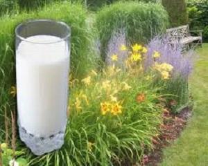 Cara Membuat Pupuk Organik Cair dari Susu Basi, Kamu Harus Tahu!