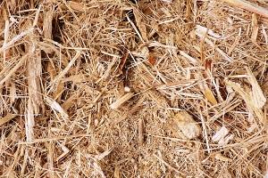 Cara Membuat Pupuk Organik dari Blotong (Limbah Pabrik Gula)