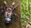 Cara Budidaya Kepiting Kenari Bagi Pemula Sampai Panen