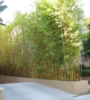 Inilah Alasan Mengapa Tanaman Bambu dapat Mencegah Tanah Longsor dan Erosi