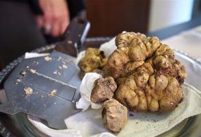 6 Cara Budidaya Jamur Truffle di Indonesia Secara Alami