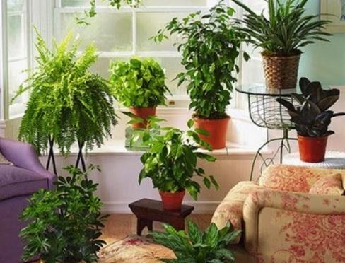 Inilah 9 Cara Merawat Bunga Indoor agar Tetap Segar