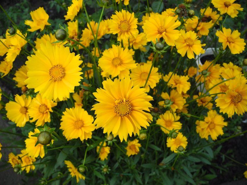Cara Merawat Bunga Hidup Agar Tidak Layu dan Tetap Tumbuh Segar