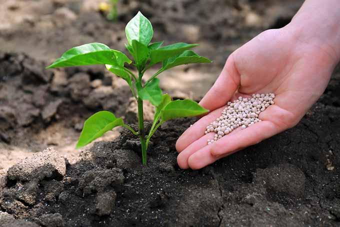 4 Alasan Pupuk Kimia Bermanfaat Tapi Membahayakan Tanah