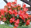 Inilah Jenis Bunga Yang Cocok Ditanam di Pot dan Nggak Ribet