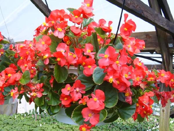 Jenis Bunga Yang Cocok Untuk Pot Gantung di Rumah Kamu!