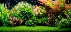 jenis tanaman akuarium yang mudah didapat