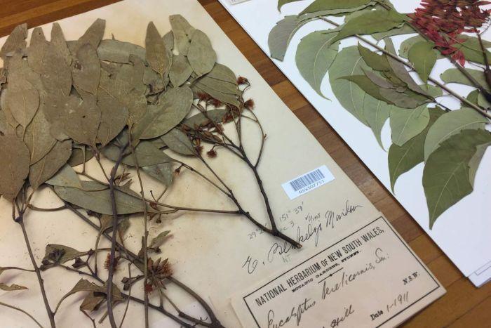 Jenis Tanaman yang Bisa Dibuat Herbarium – Berasal Dari Tanaman Herbal
