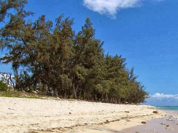 5 Jenis Tanaman yang Cocok Ditanam di Daerah Pantai