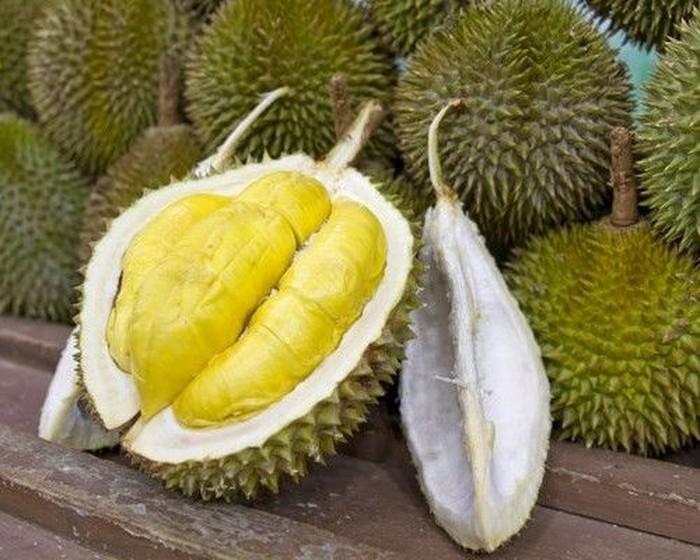 Cara Memilih Bibit Durian Musang King yang Unggul
