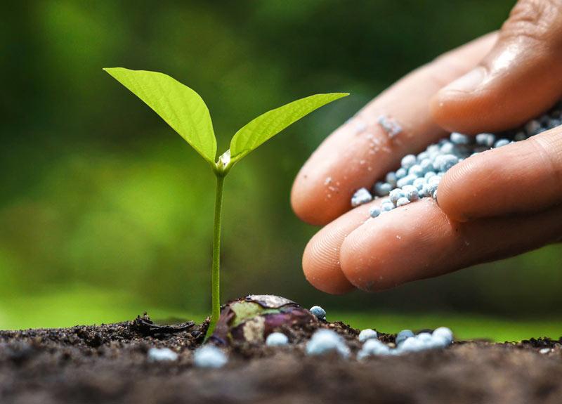 Manfaat Pupuk Urea Untuk  Tanaman Bunga Agar Hasil Maksimal