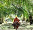 Tanaman Yang Cocok Untuk Usaha Perkebunan di Dataran Rendah