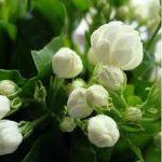 Bunga Yang Sesuai Ditanam Di Pemakaman