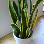 Jenis tanaman yang tidak terlalu membutuhkan sinar matahari