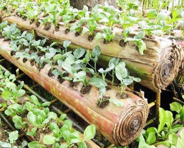 Manfaat Gedebog Pohon Pisang untuk Pupuk Tanaman