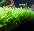 4 Penyebab Carpet Seed Tidak Tumbuh dan Cara Mengatasinya