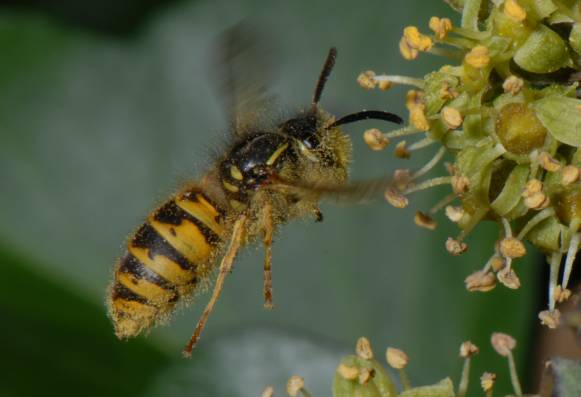 7 Jenis Hama Yang Menyerang Sarang Lebah dan Cara Membasminya