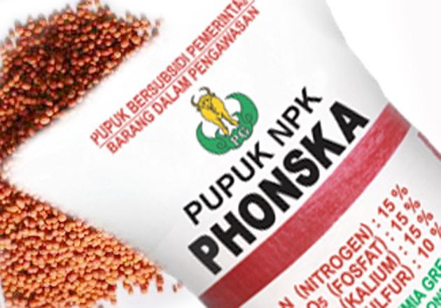 Kegunaan Pupuk Phonska Pada Padi – Tips Perawatan Sampai Panen