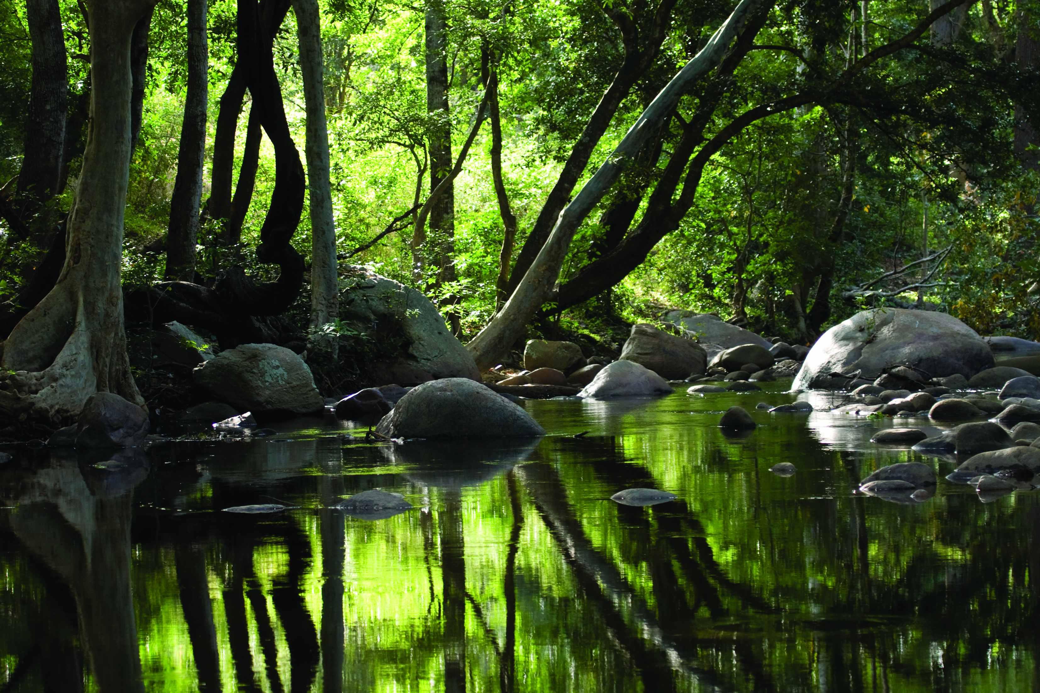 केरल की पहाड़ियां और मनोरम दृश्य