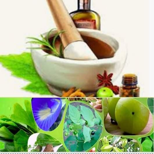 herbal medicines better in diseases