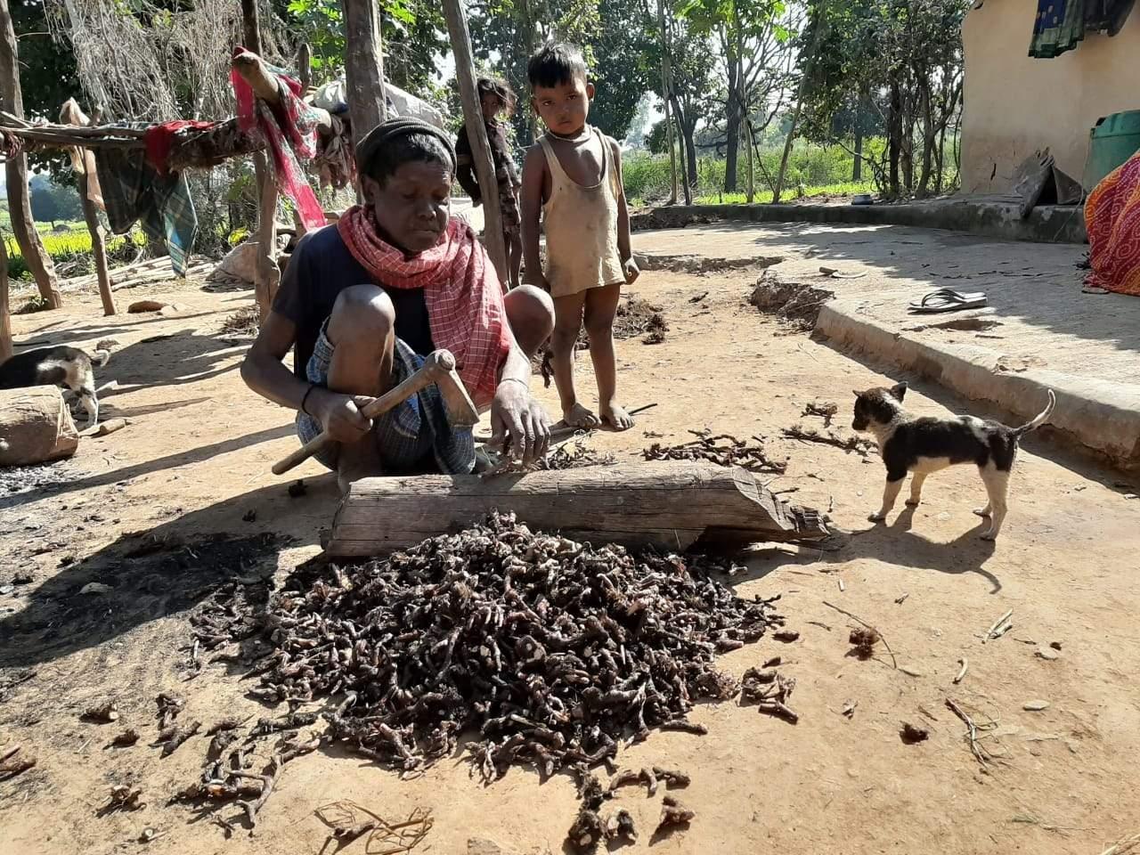 herbs destroyed in sonbhadra