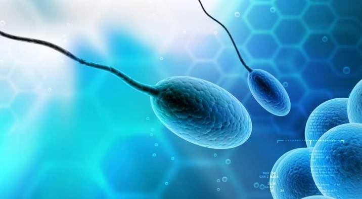 sperm quality