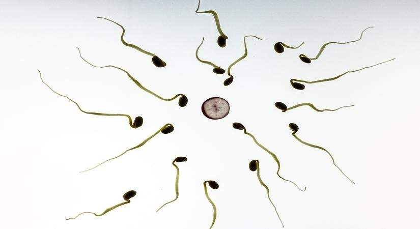 men to boost thier fertility naturally