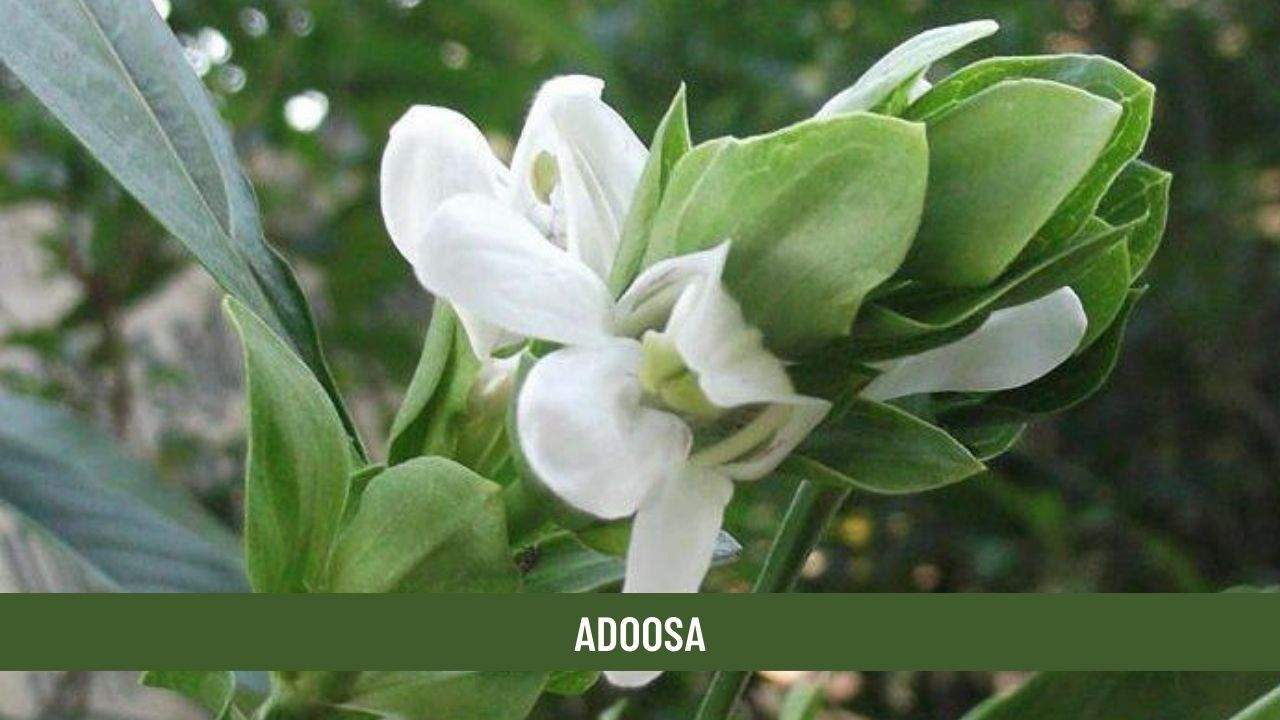 Adoosa