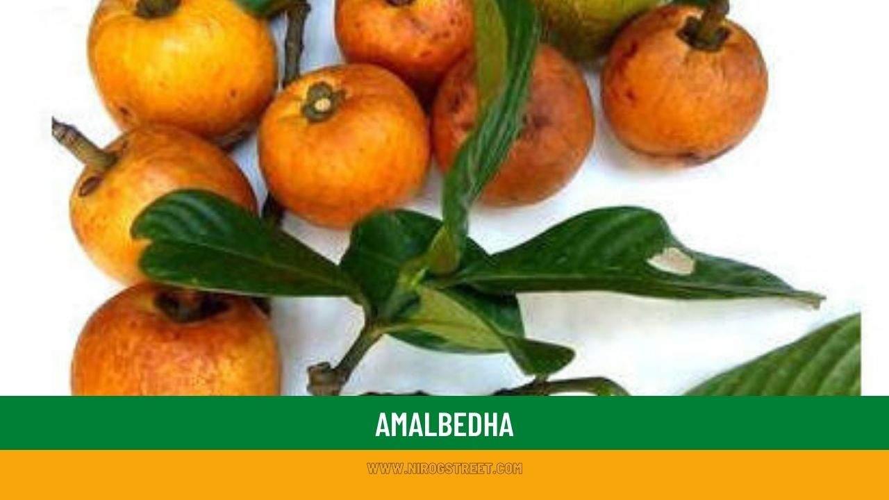 Amalbedha