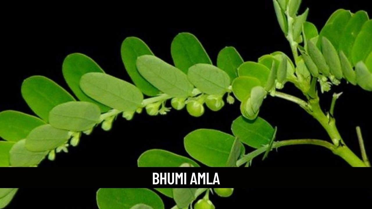 Bhumi Amla