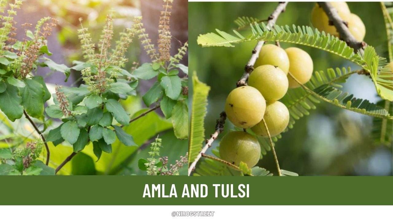 Amla and Tulsi