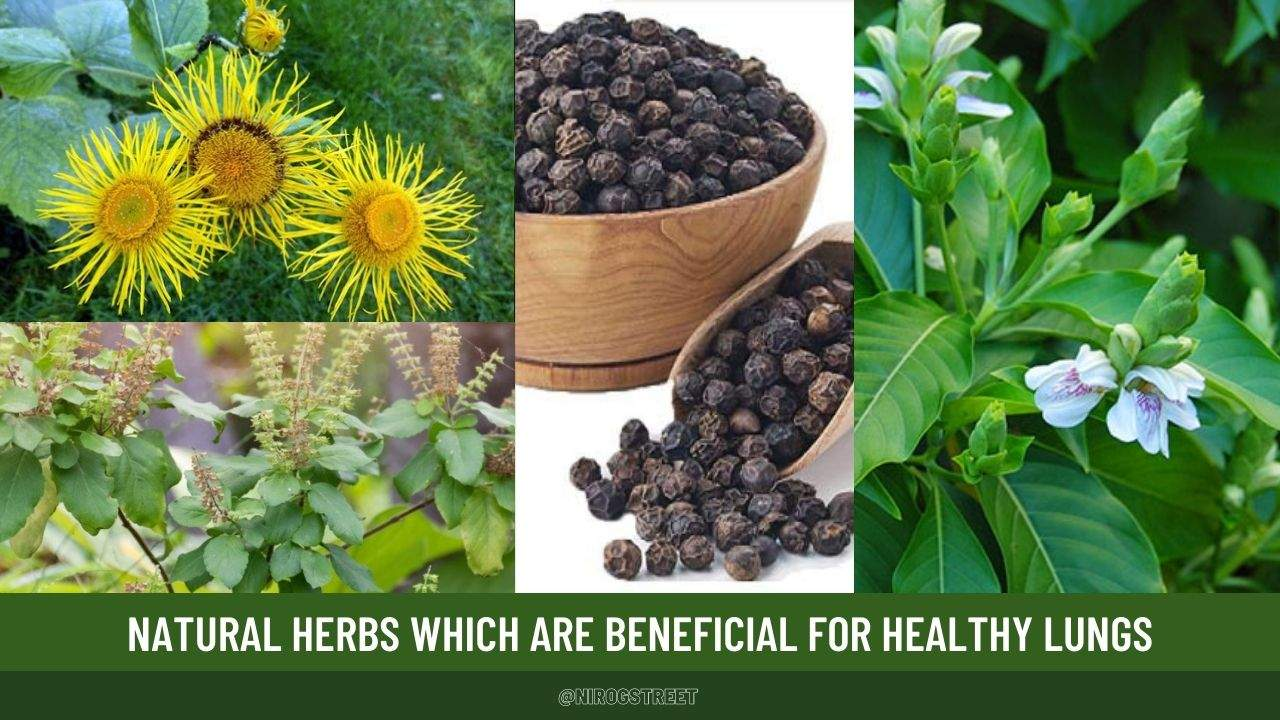 herbs for lung