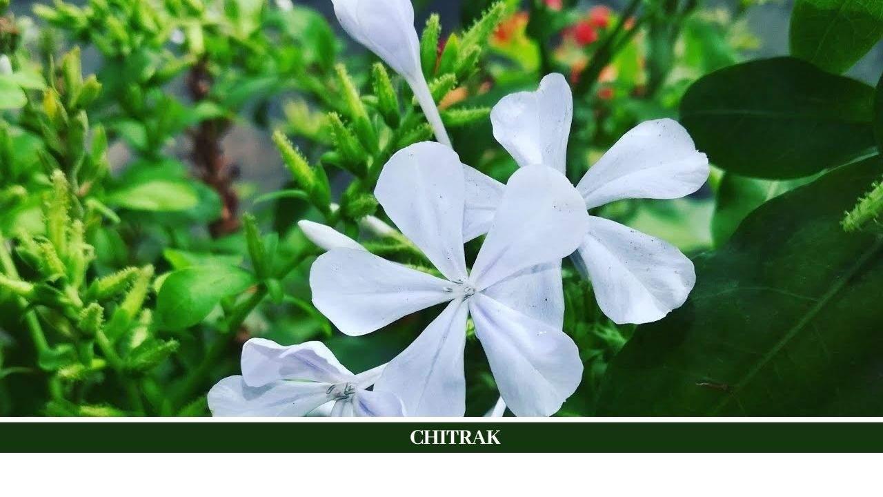Chitrak