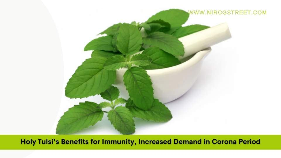 Holy Tulsi's Benefits for Immunity, Increased Demand in Corona Period
