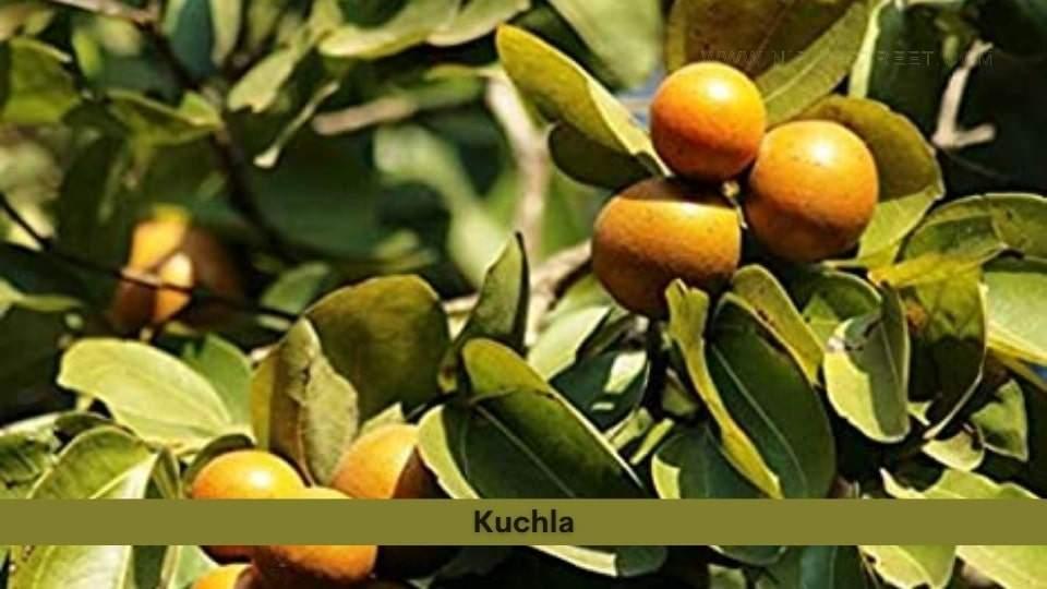 Kuchla