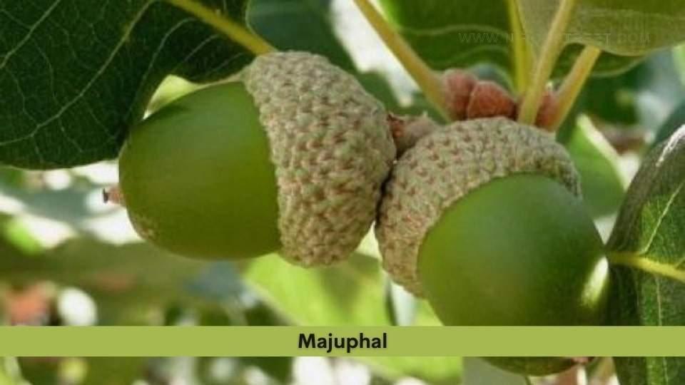 Majuphal