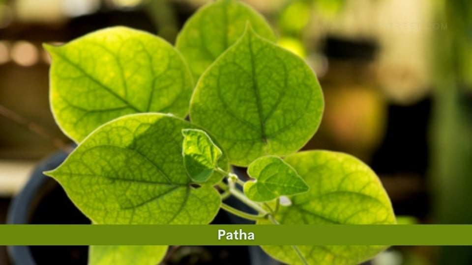 Patha
