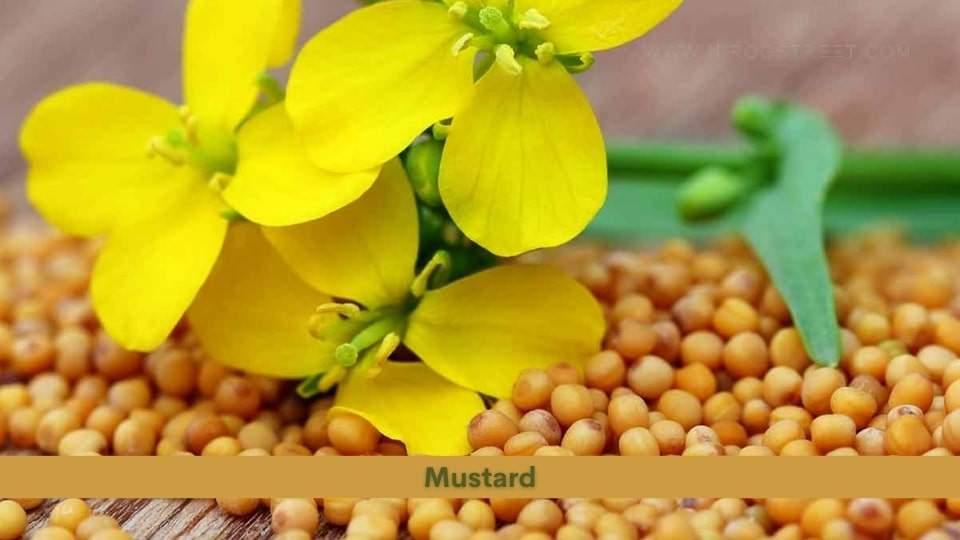 Mustard Health Benefits