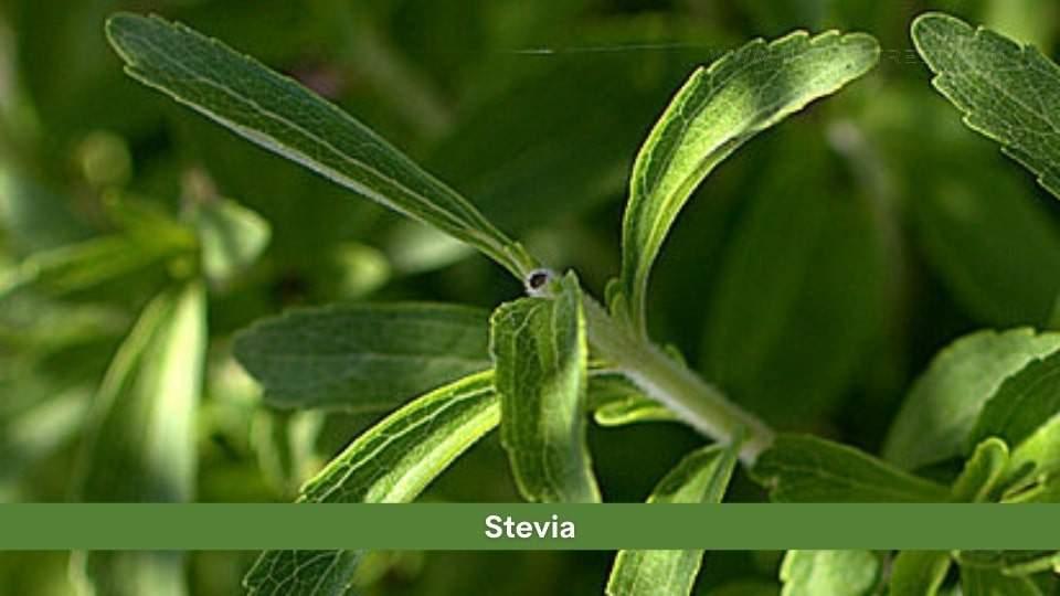 Stevia Health Benefits