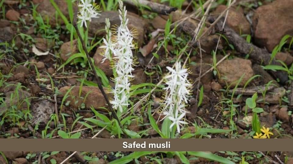 Safed Musli