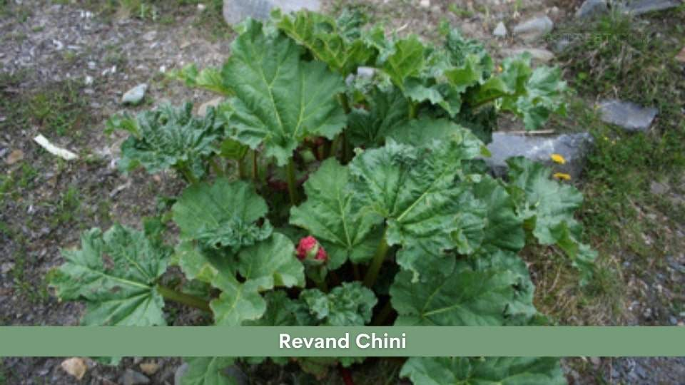 Revand Chini