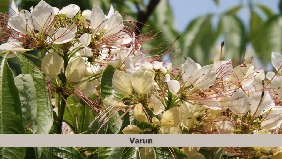 Varun