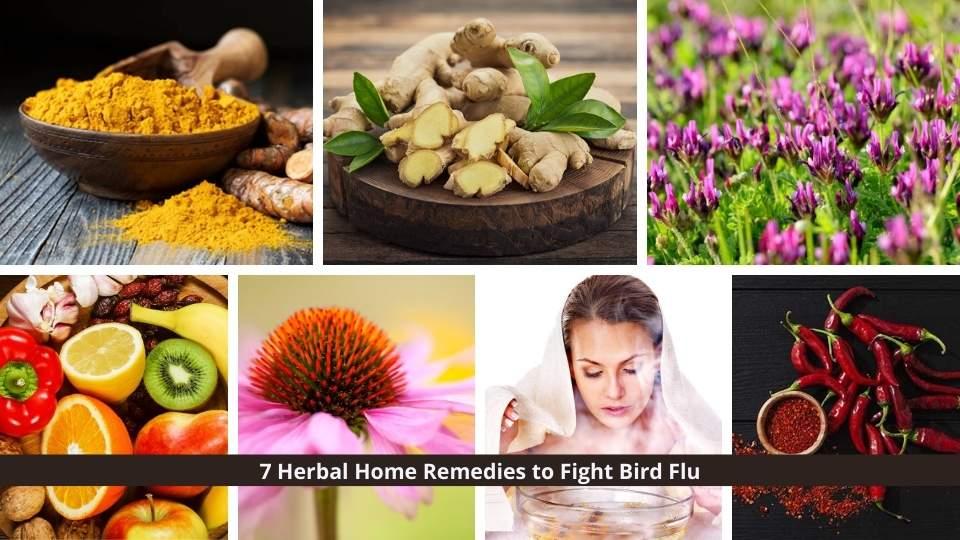 Bird flu (Avian influenza)