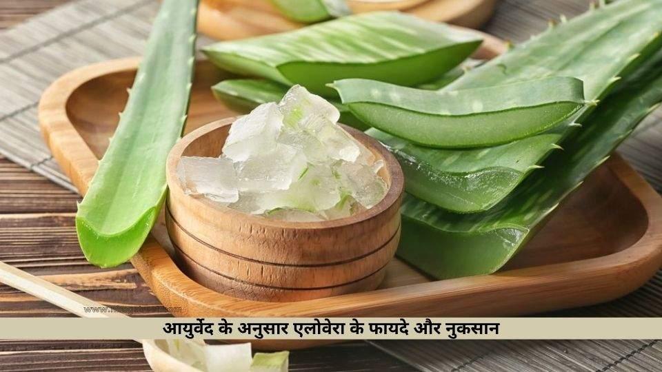 Aloevera ke Fayde aur Nuksan in Hindi