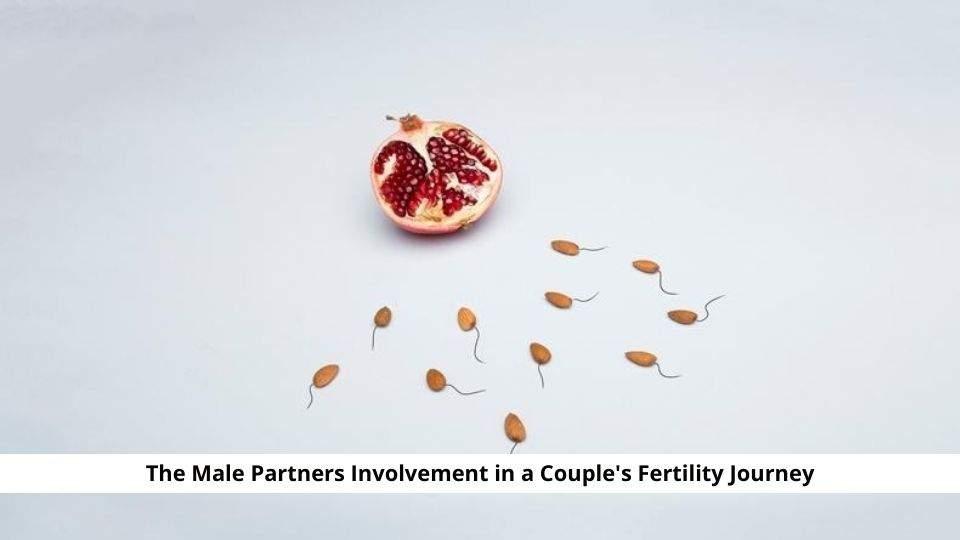 Couple's Fertility Journey