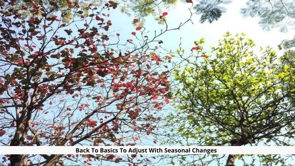 Back To Basics To Adjust With Seasonal Changes
