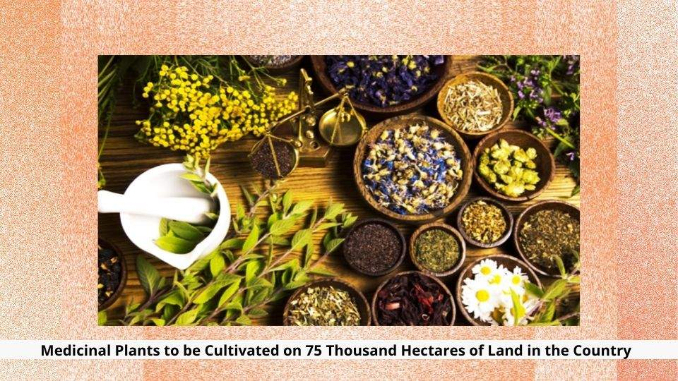 Medicinal Plants to be Cultivated